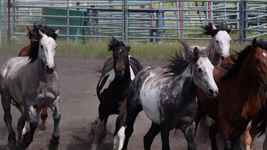 Bonnyville Pro Rodeo and Chuckwagon Races